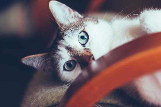 cat-7784.jpg